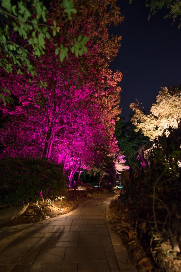 Fx Luminaire Luxor Zdc Low Voltage Landscape Lighting