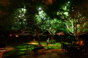 moonlighting-tall-trees-courtyard-sachse-BG